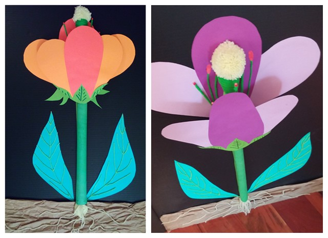 Science Flower Anatomy 3d Project Stories To Read