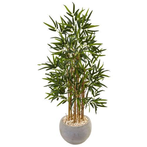 Medium Of Bamboo House Plant
