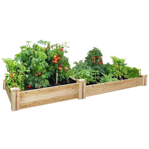 Medium Of Home Gardening Kit