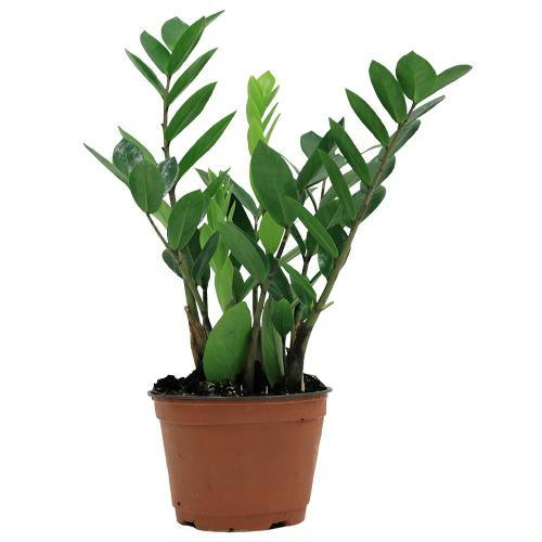 Medium Crop Of Home Depot House Plants