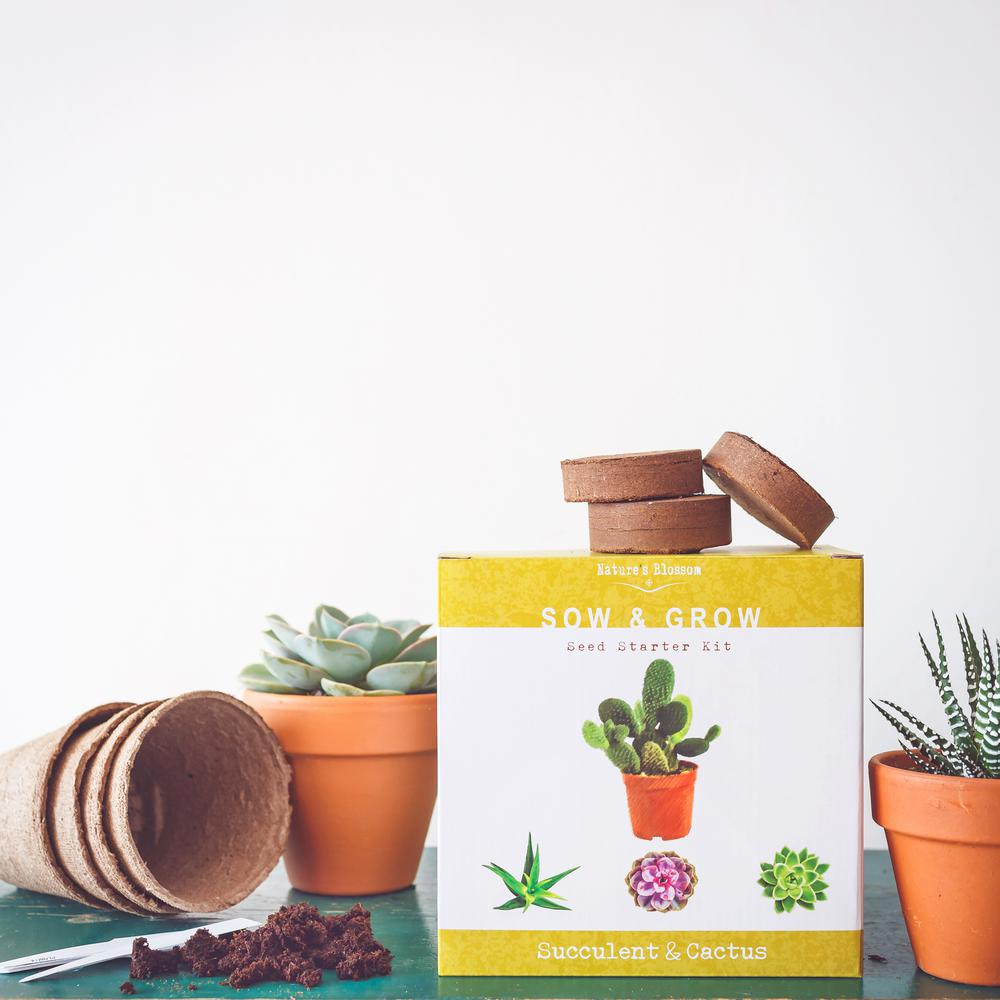 Cactus Planting Pots Nature S Blossom Complete Set With Seeds Planting Pots Organic Soil And Guide Succulent And Cactus Growing Kit