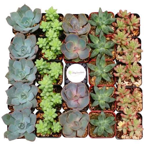 Medium Crop Of Succulents Home Depot