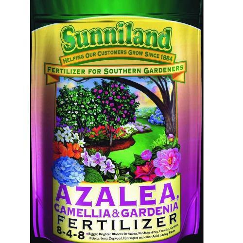 Medium Of When To Fertilize Azaleas