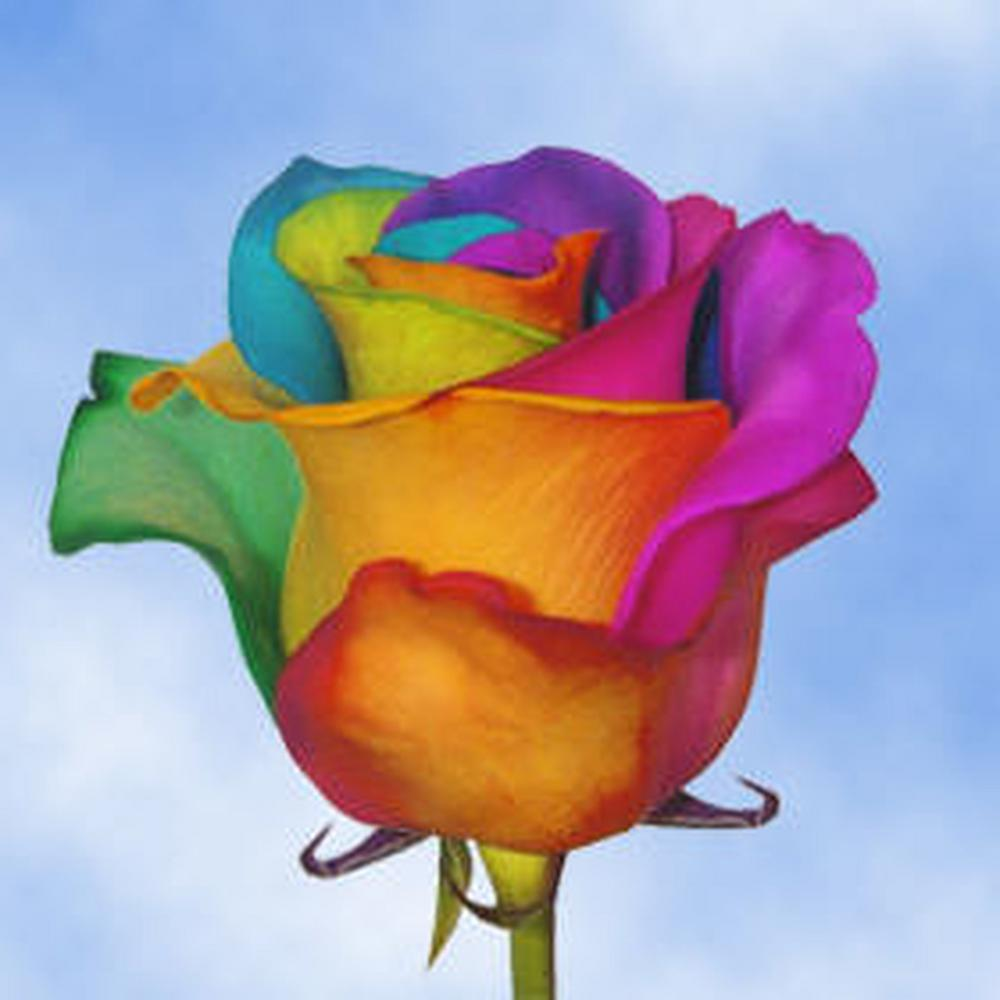 Rose Globalrose 50 Stems Of Multi Color Rainbow Roses