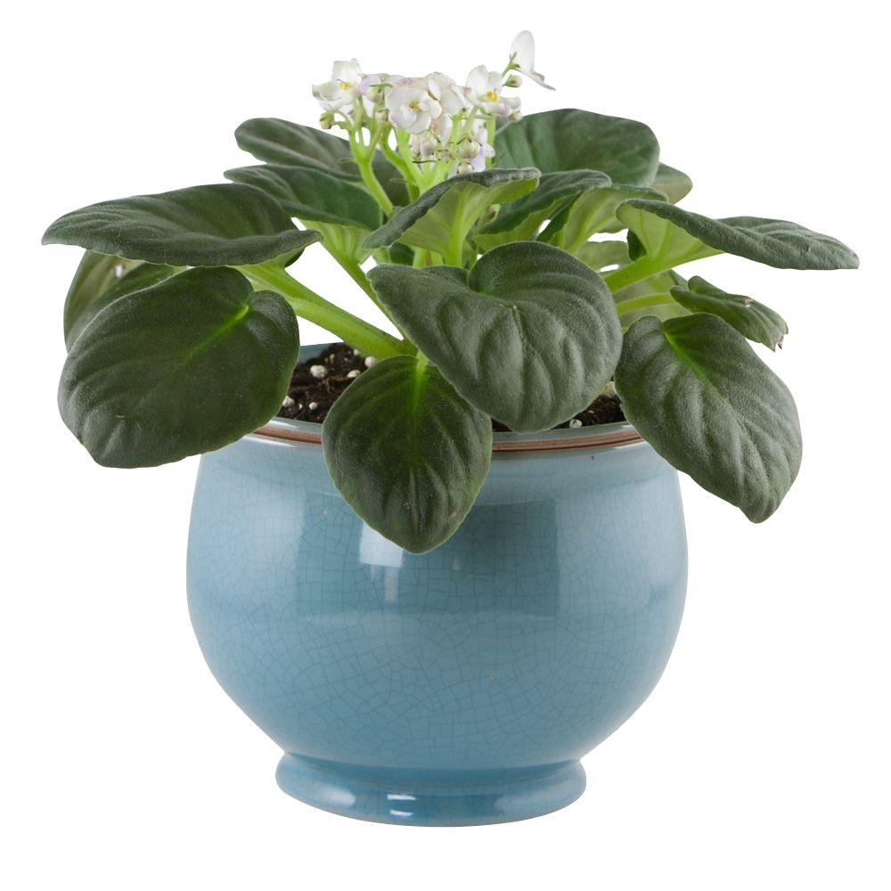 Make Self Watering Planters Central Garden And Pet 6 25 In Aqua Ceramic Crackle Self Watering Planter