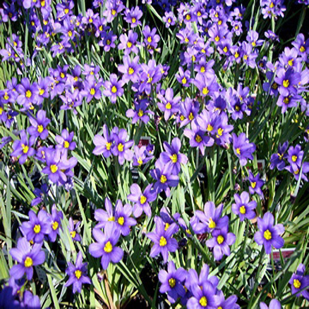 Spring to Summer - Garden Plants  Flowers - Garden Center - The