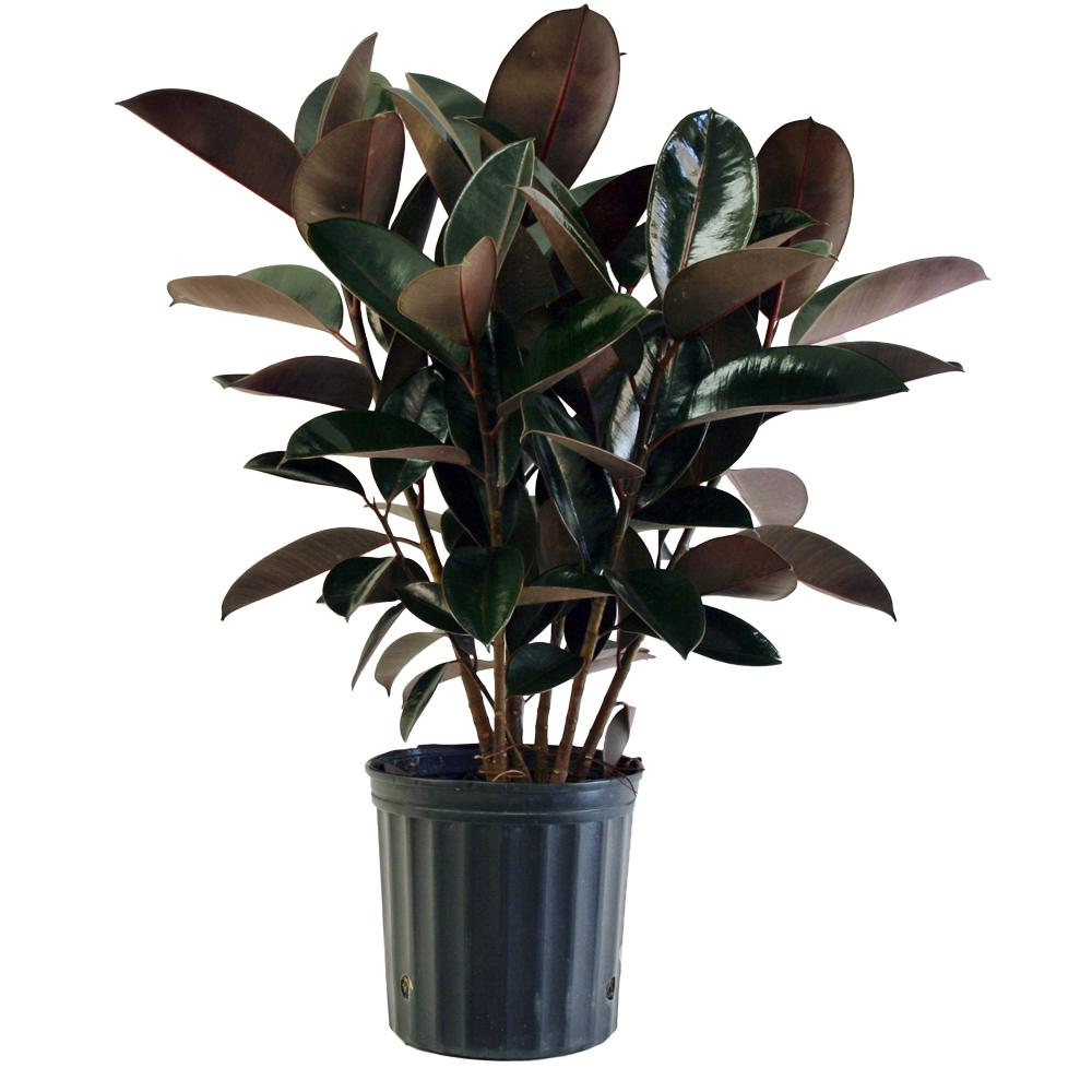 Fullsize Of Home Depot House Plants