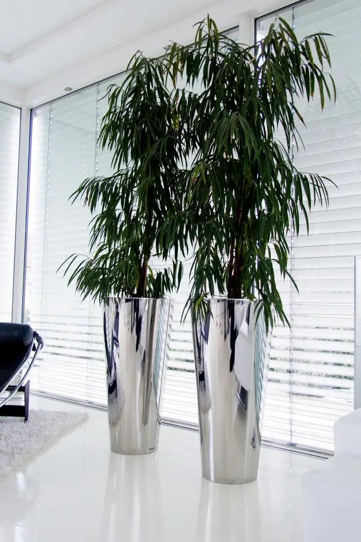 Blumenkübel Fürs Wohnzimmer Balkonpflanzen Richtig Setzen Und