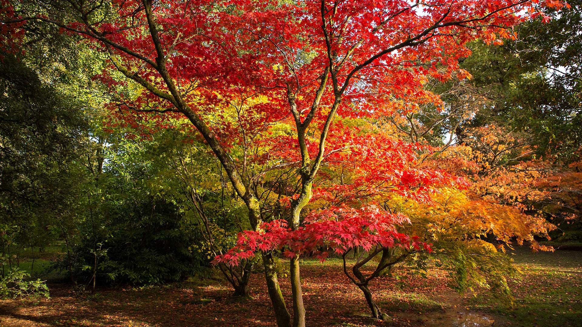 Sincere Girl Wallpaper Best Places To View Autumn Leaves In Britain