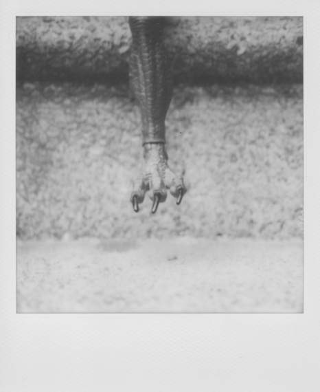 2015-07-22-1437578465-9981971-PolaroidBW1.jpeg