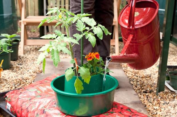 Grow Tomatoes In A Growing Bag Gardenersworldcom