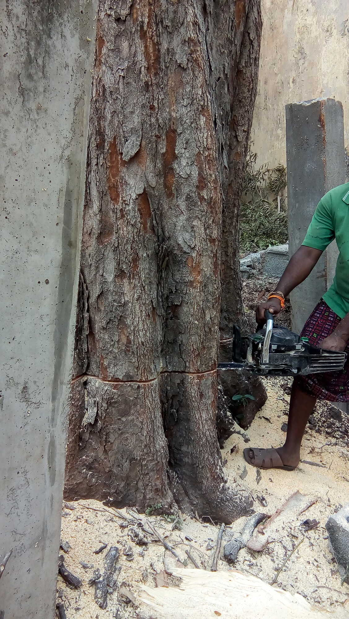 Tree Cutter Top 4 Tree Cutter On Hire In Chennai Best Tree Cutting Machine