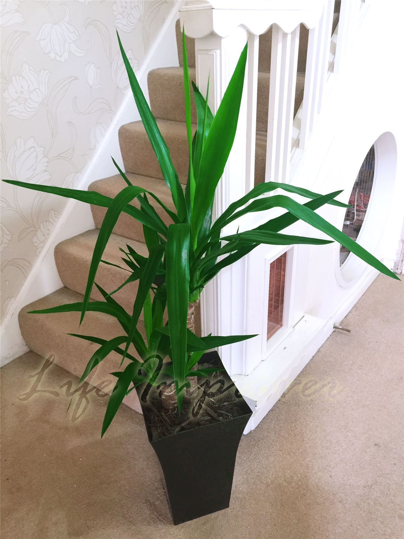 Large Indoor House Plants For Sale 1 Large Indoor Office House Tree Milano Gloss Pot Palm