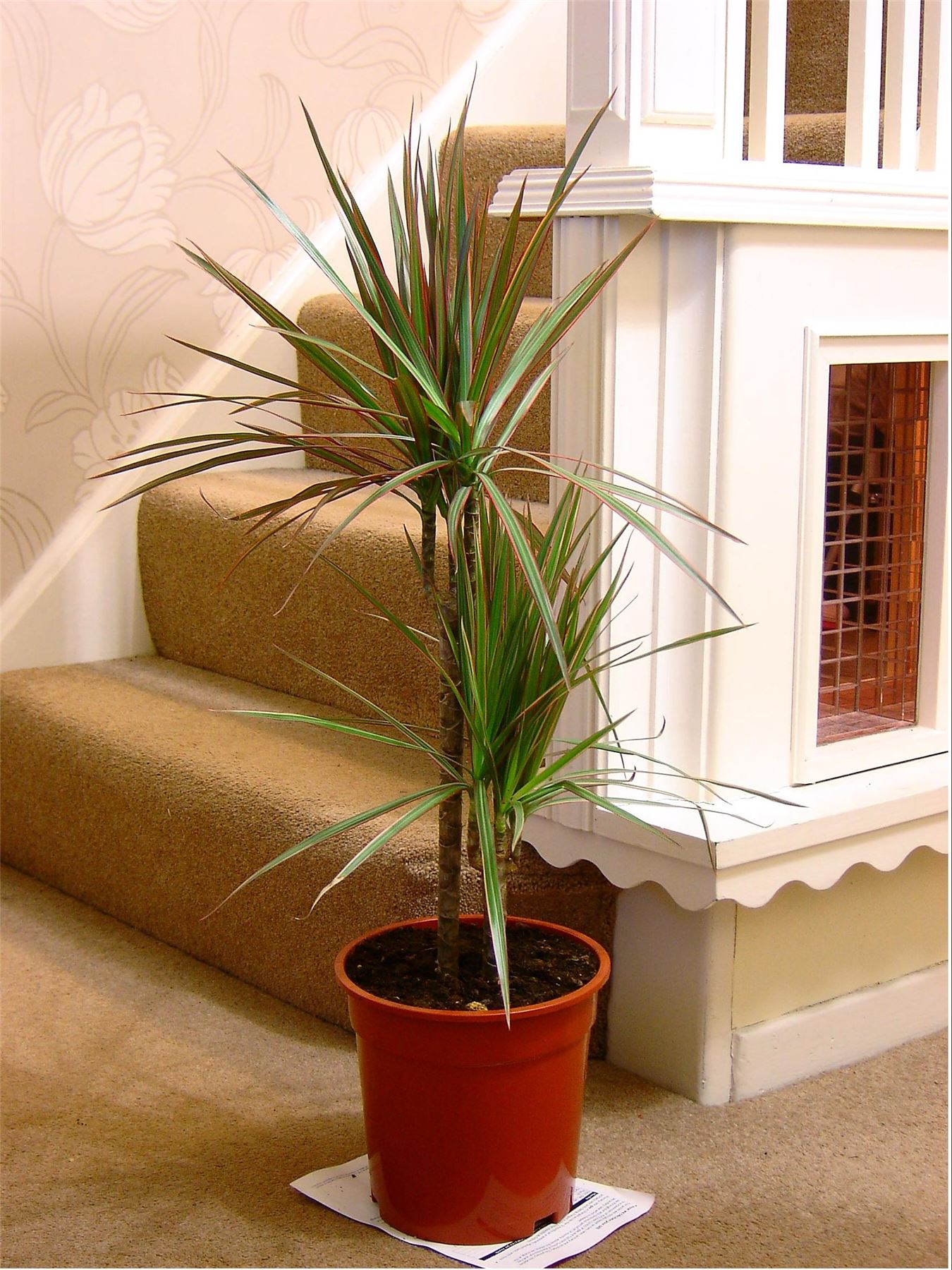 Floor Plants Indoor 1popular Evergreen Indoor House Plant Pot Office Home
