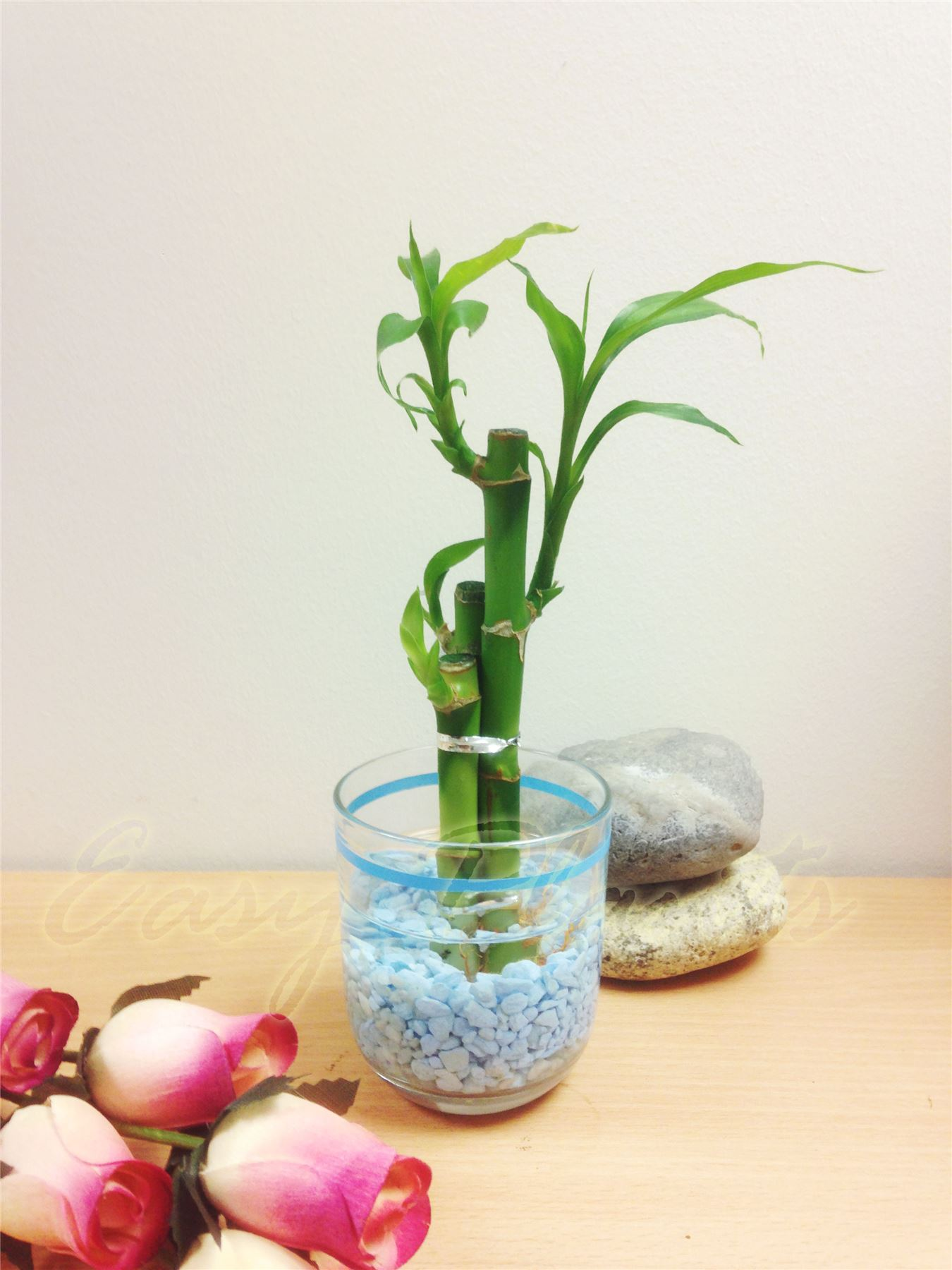 Bamboo Vase Decoration 1 Lucky Bamboo Ribbon Plant 3 Stalks In Colour Vase House