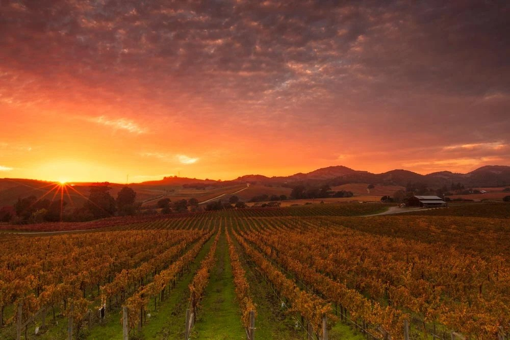 Fall Harvest Wallpaper Napa Valley California Map Facts Location Best Time