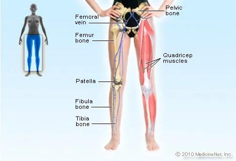 Leg Picture Image on MedicineNet