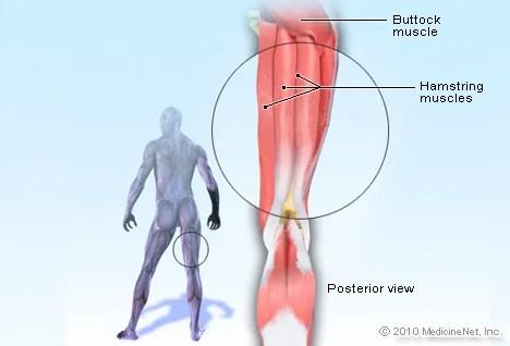 Hamstring Injury Symptoms, Recovery  Treatment