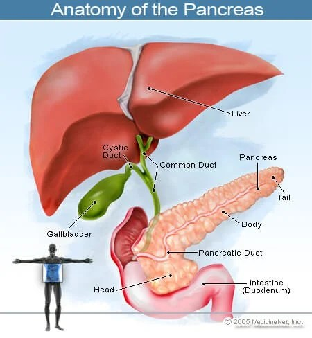 Pancreatic Cancer Treatment, Causes, Stages, Tests  Prognosis