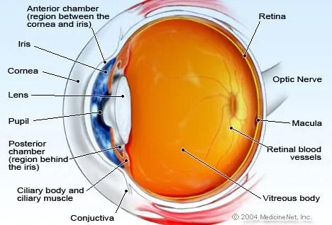 Eye Anatomy Detail Picture Image on MedicineNet