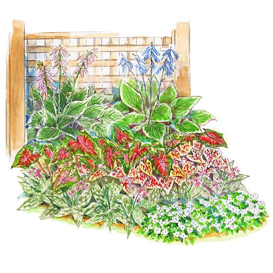 Shady Foliage Garden Plan