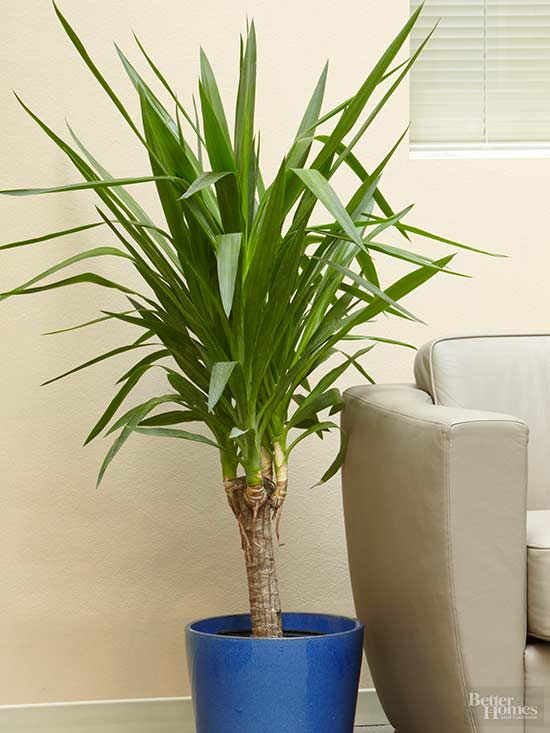 Ikea Palm Tree Indoor Trees That Spruce Up Any Space