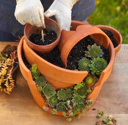 Wallpaper Falling Off Wall How To Plant A Cracked Pot Succulent Garden Midwest Living