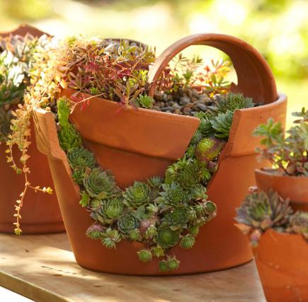 Falling Down Flowers Wallpaper How To Plant A Cracked Pot Succulent Garden Midwest Living