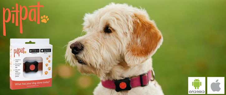 suggest using pitpat wearable activity monitor for dogs publisher trusted