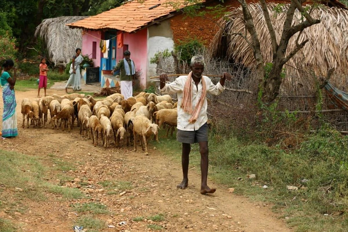 Shepherd Tests Positive For Covid 19 In Karnataka Experts To Draw Throat Samples Of 50 Sheep The New Indian Express