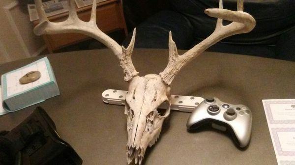 Nice Deer Antlers Asking Only 55 For Sale In San Antonio