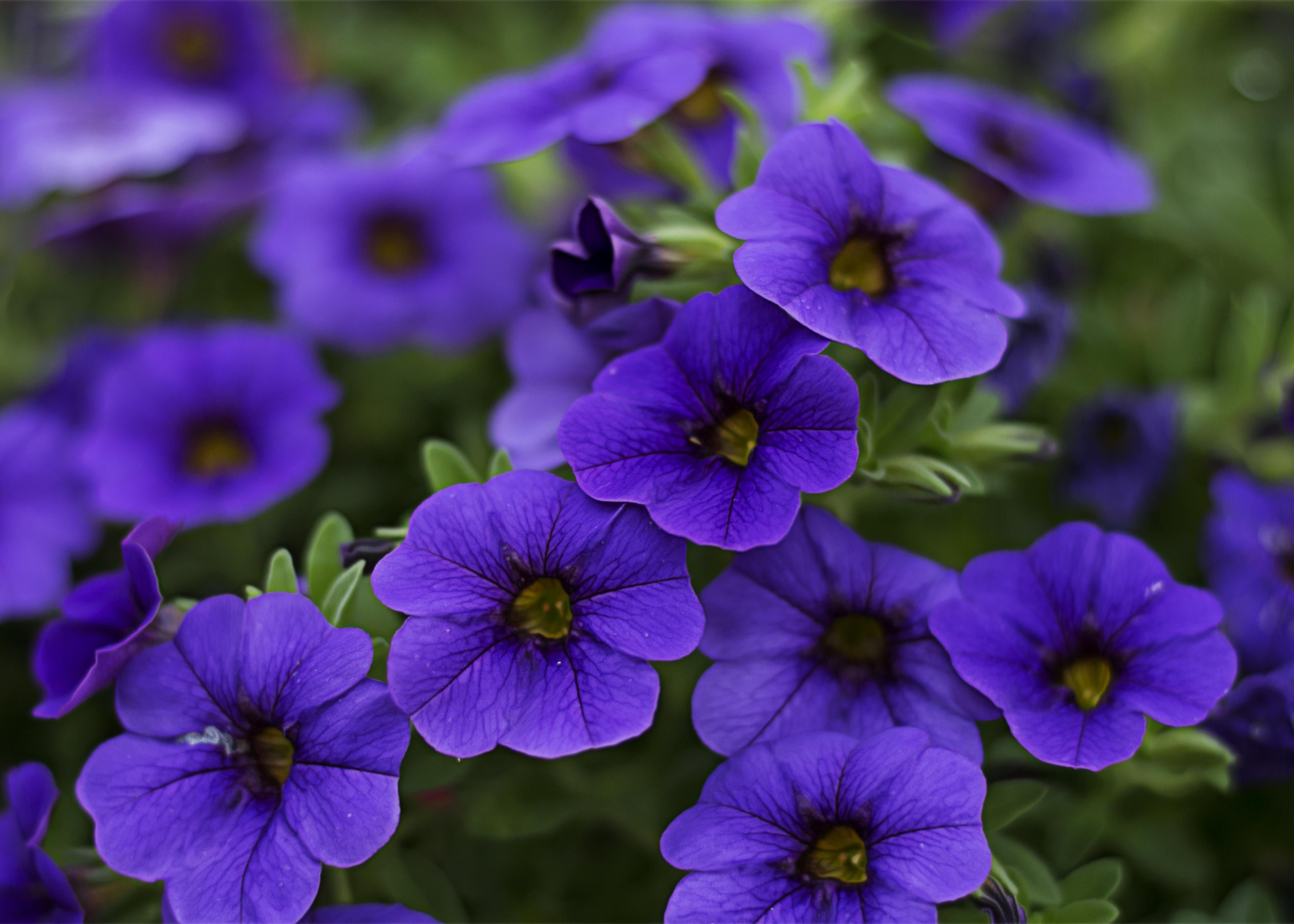 Lock Screen Wallpaper Iphone 7 Purple Flowers 183 Pexels 183 Free Stock Photos