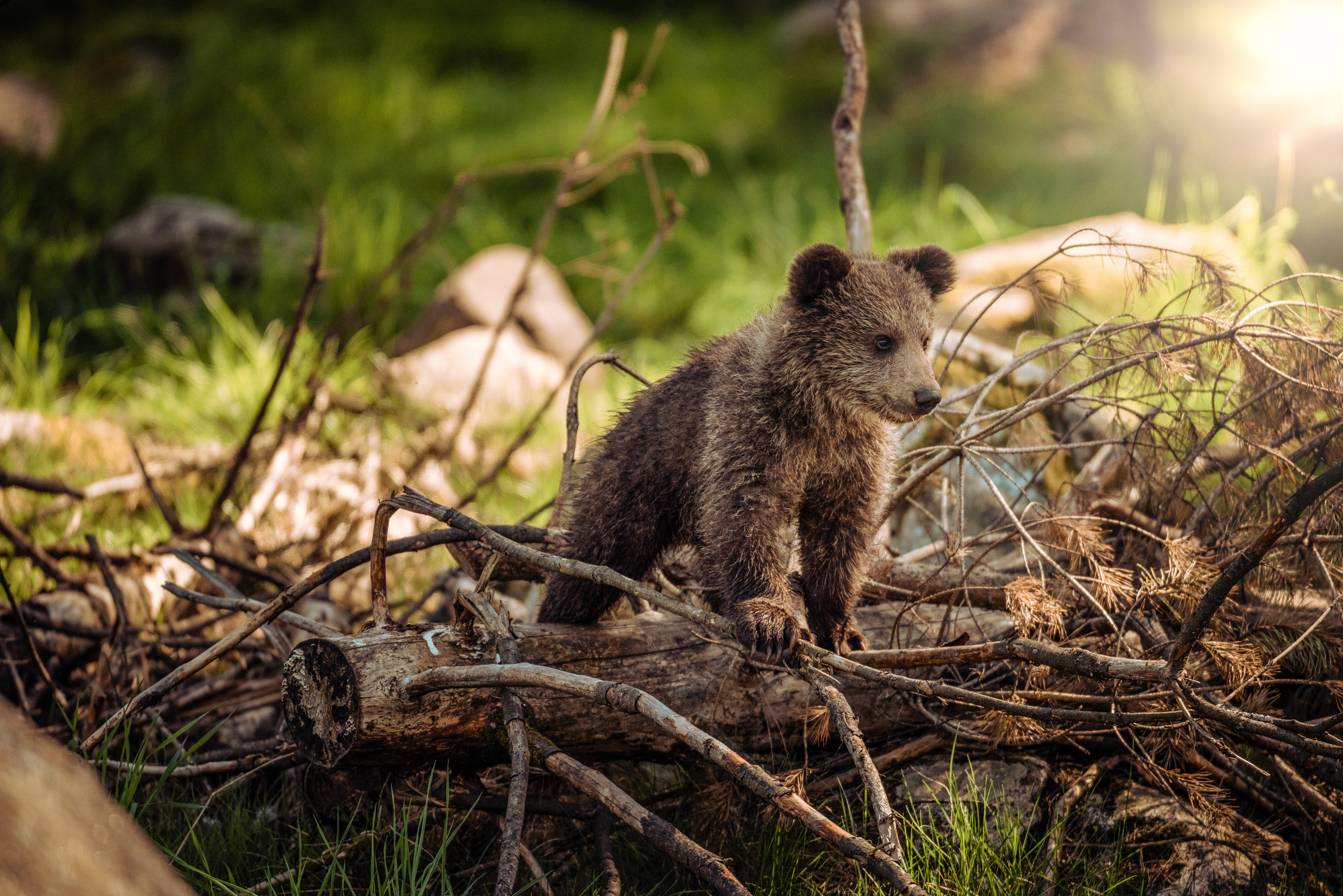 Cute Teddy Bears Wallpapers Hd 167 Incredible Bear Pictures 183 Pexels 183 Free Stock Photos