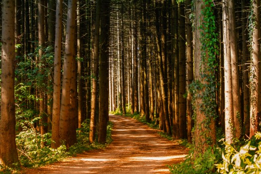 Black And White Iphone 5 Wallpaper 1000 Interesting Forest Path Photos 183 Pexels 183 Free Stock