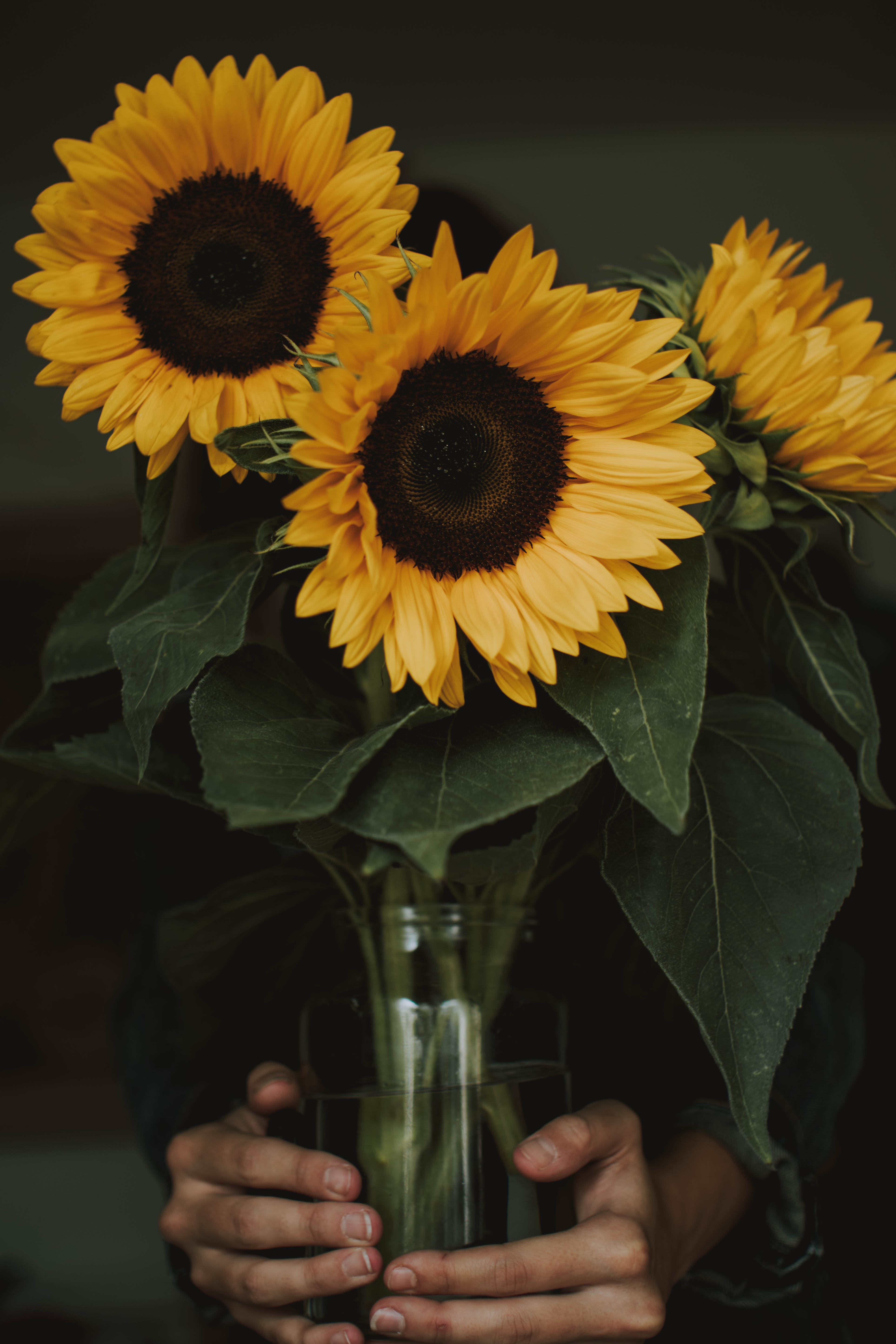 Beautiful Iphone 5 Wallpapers Free Stock Photo Of Flower Nature Sunflower