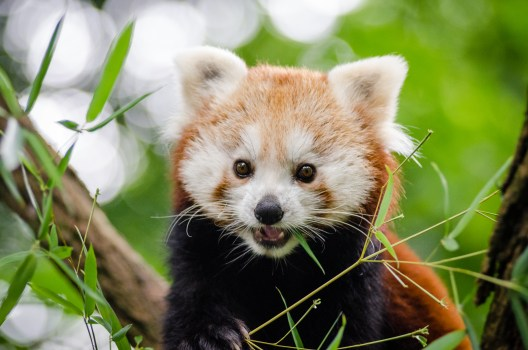 I Want To Download Cute Wallpapers Brown And White Wolverine Animal 183 Free Stock Photo