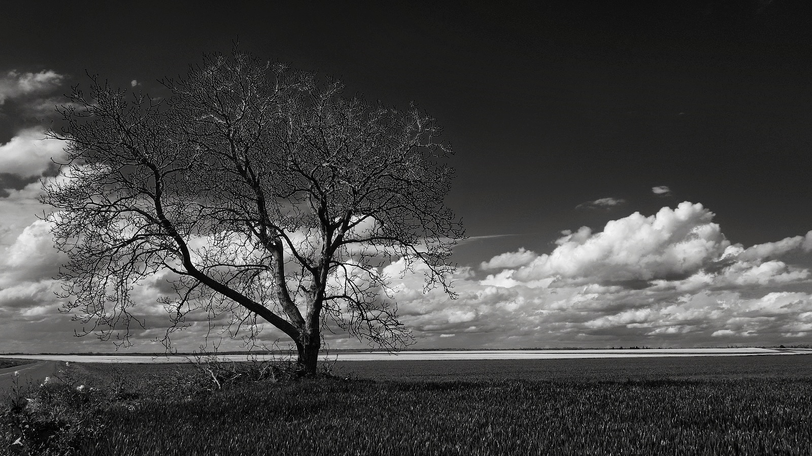 Fall Trees Wallpaper Grayscale Photo Of Ocean 183 Free Stock Photo
