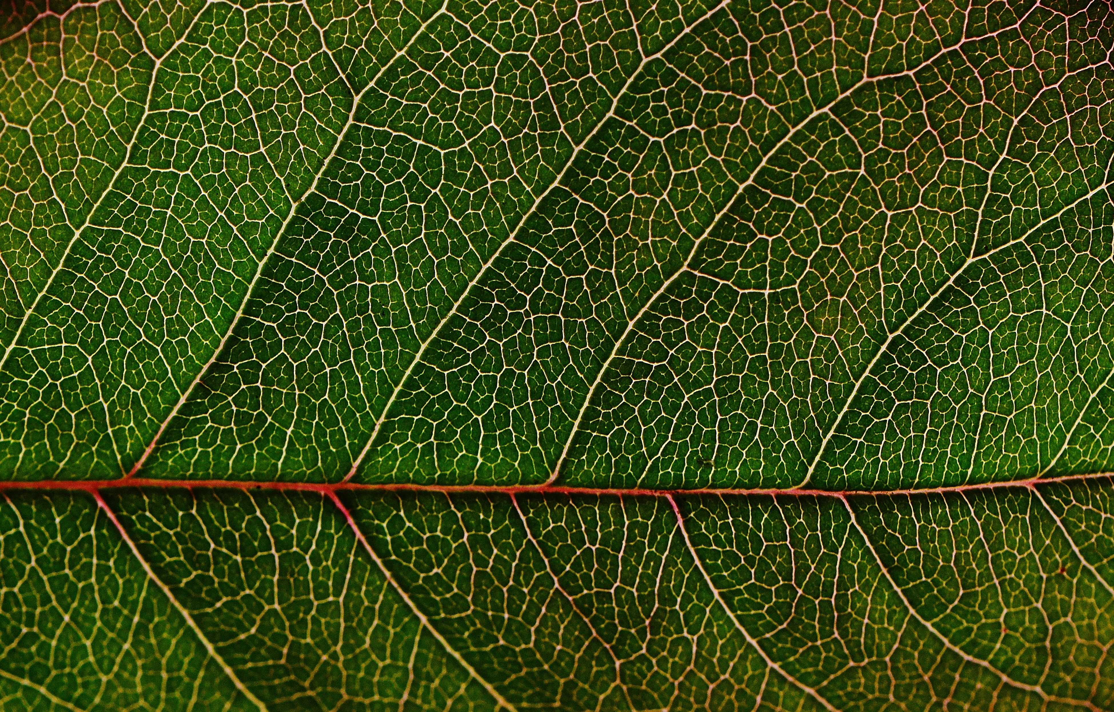 4k Hd Wallpapers For Iphone 1000 Great Leaf Texture Photos 183 Pexels 183 Free Stock Photos