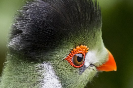 Green Car Wallpaper Free Stock Photo Of Bird Parrot Toucan