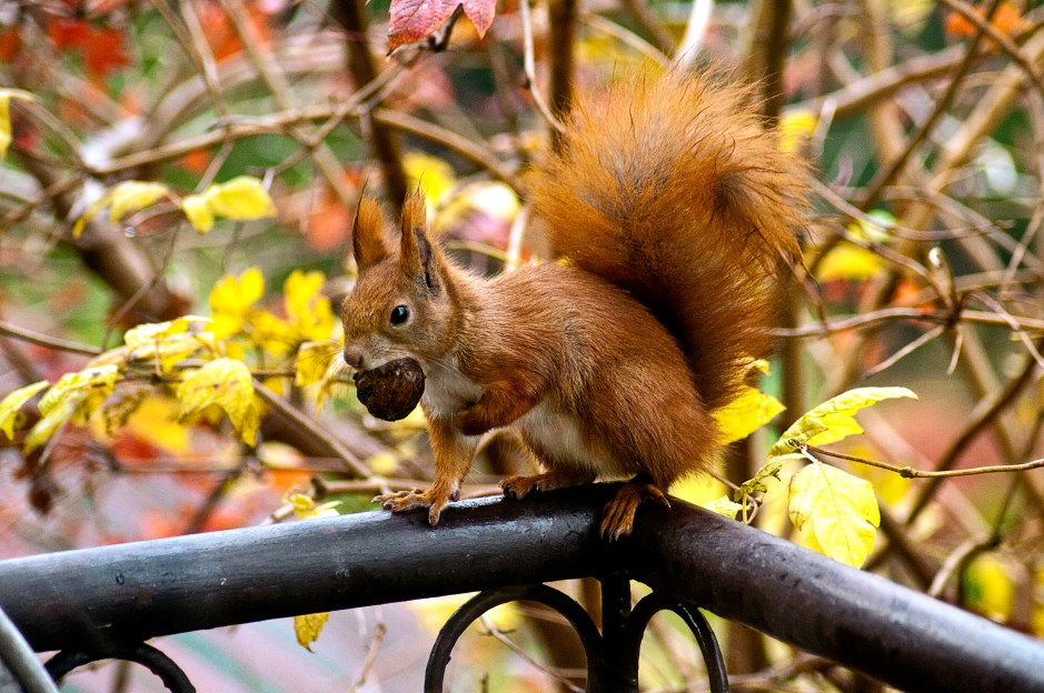 Cute Wallpapers Flower Squirrel Eating Acorn 183 Free Stock Photo