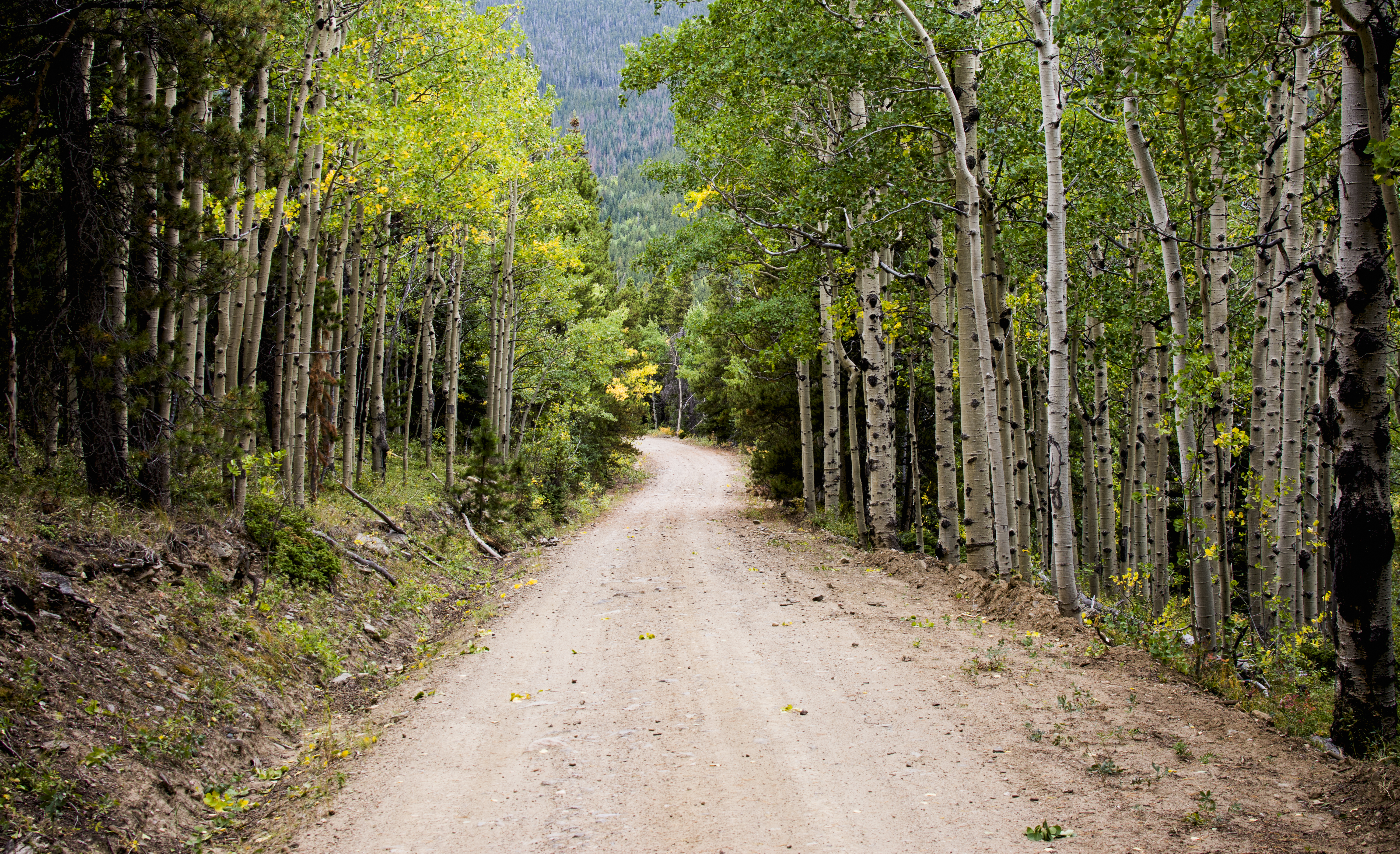 Fall Landscape Free Wallpaper Dirt Road Surrounded Green Grasses By Trees At Daytime