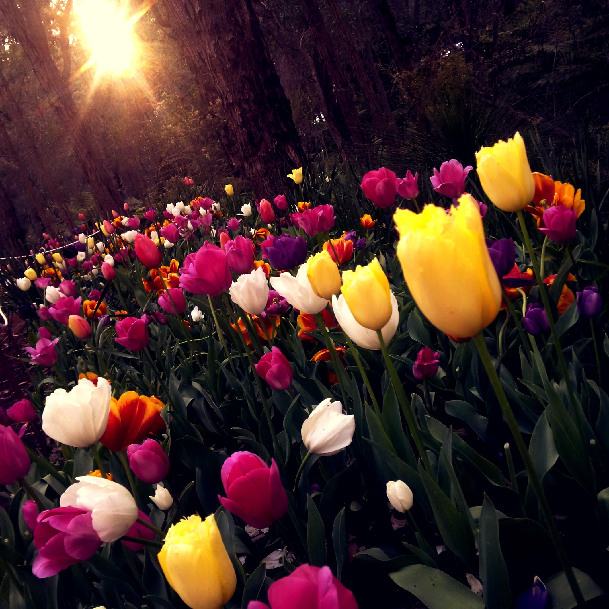 Beautiful Fall Wallpaper Desktop 1000 Amazing Flower Garden Photos 183 Pexels 183 Free Stock