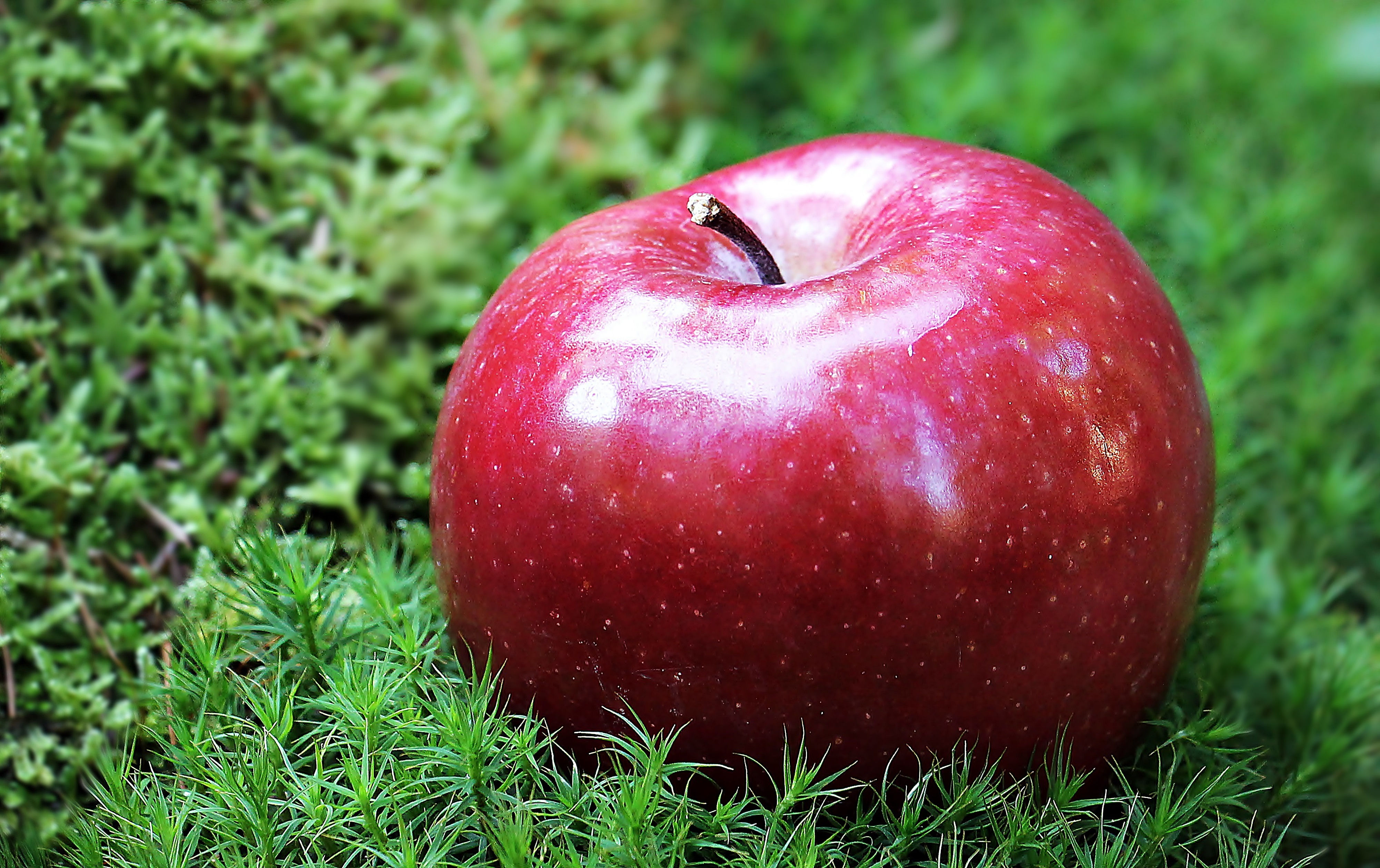 Iphone Happy New Year Wallpaper Red Apple Fruit Photography 183 Free Stock Photo