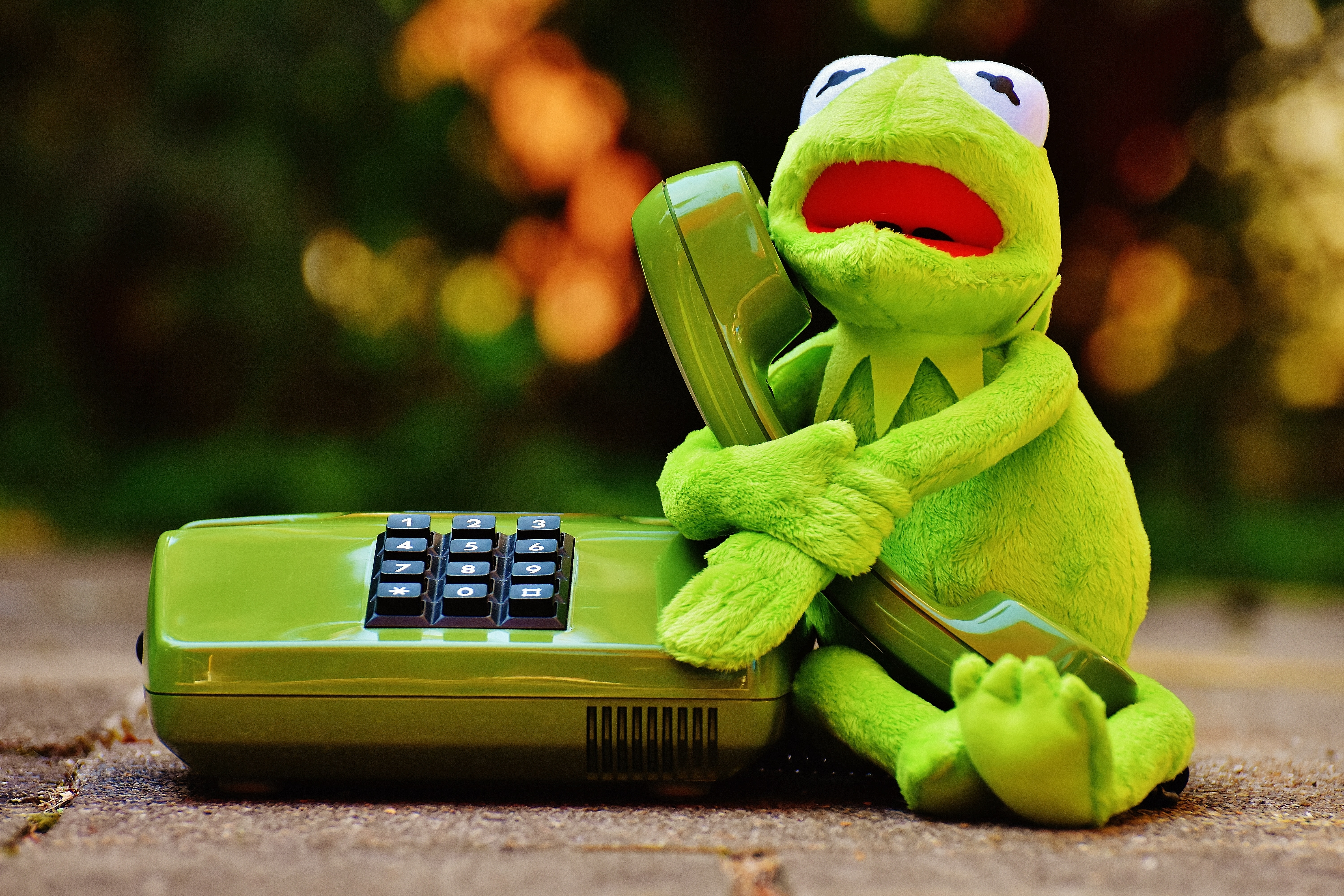Black Phone Wallpaper Kermit The Frog Holding Green Desk Phone 183 Free Stock Photo