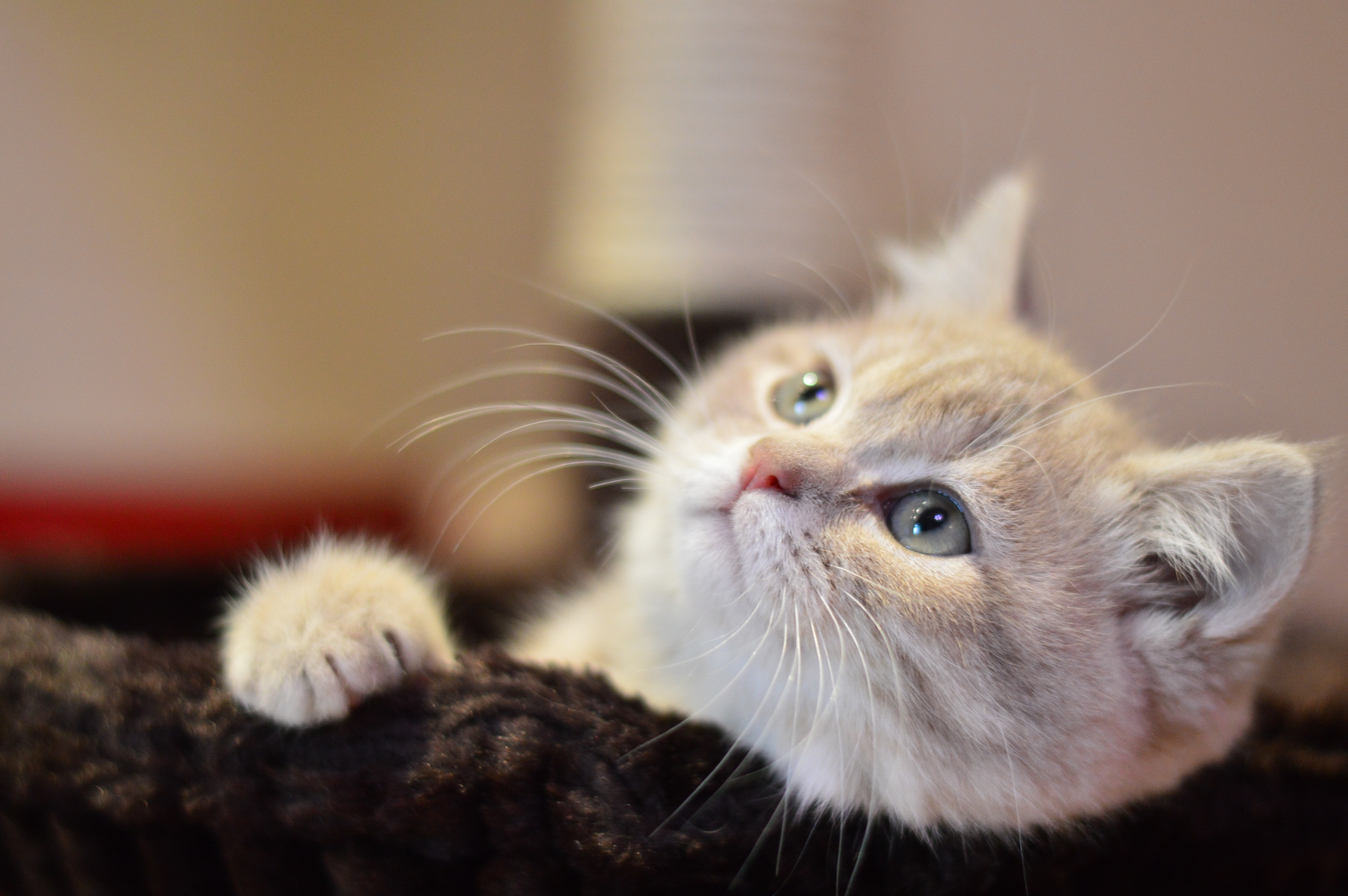 Wallpapers Hd Iphone 5 Free Stock Photo Of Animal Cat Cute
