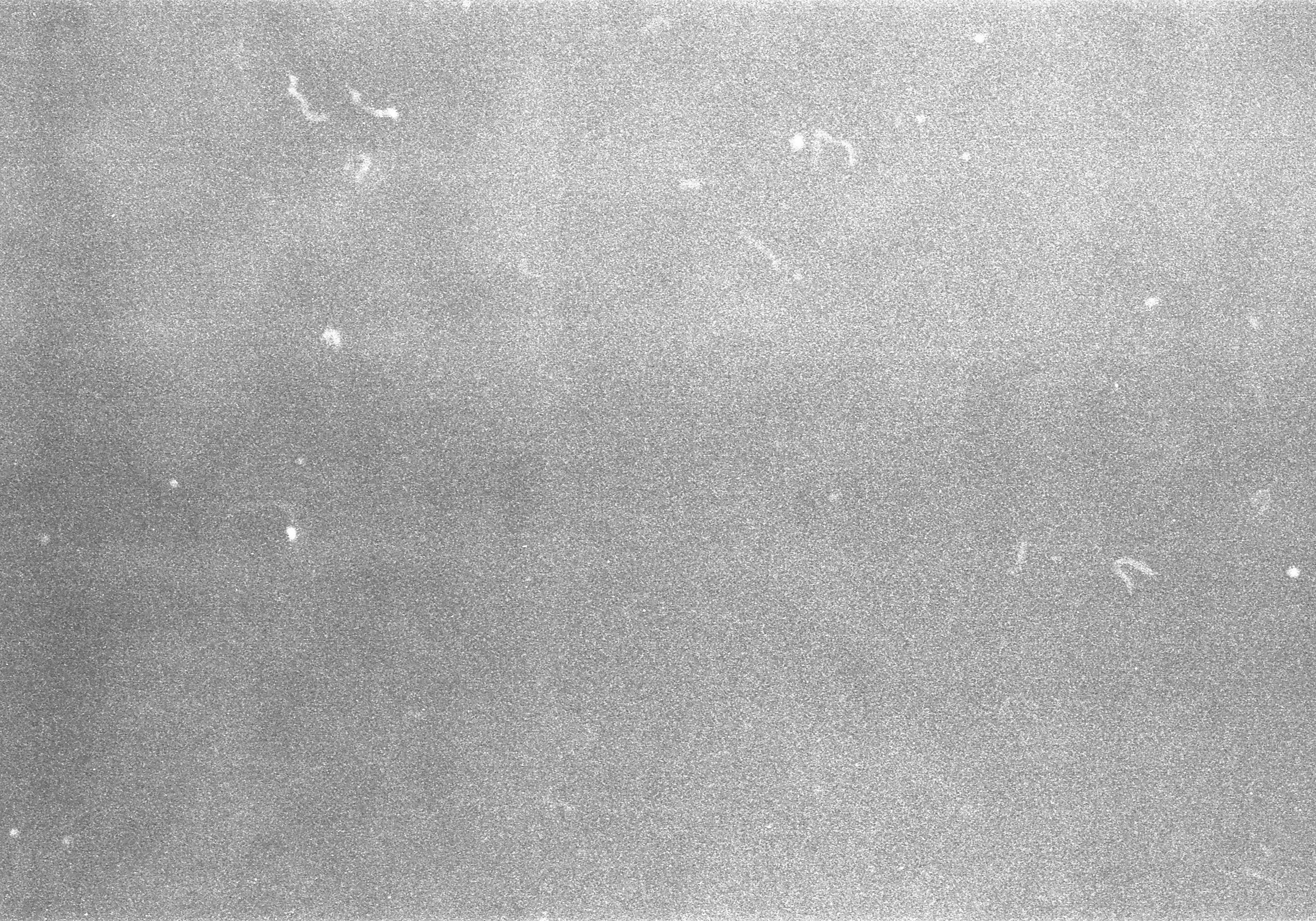 Pattern Wallpaper Hd Free Stock Photo Of 35mm Film Grain