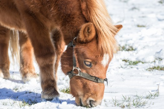 High Definition Animal Wallpapers Free Stock Photo Of Animal Farm Foal