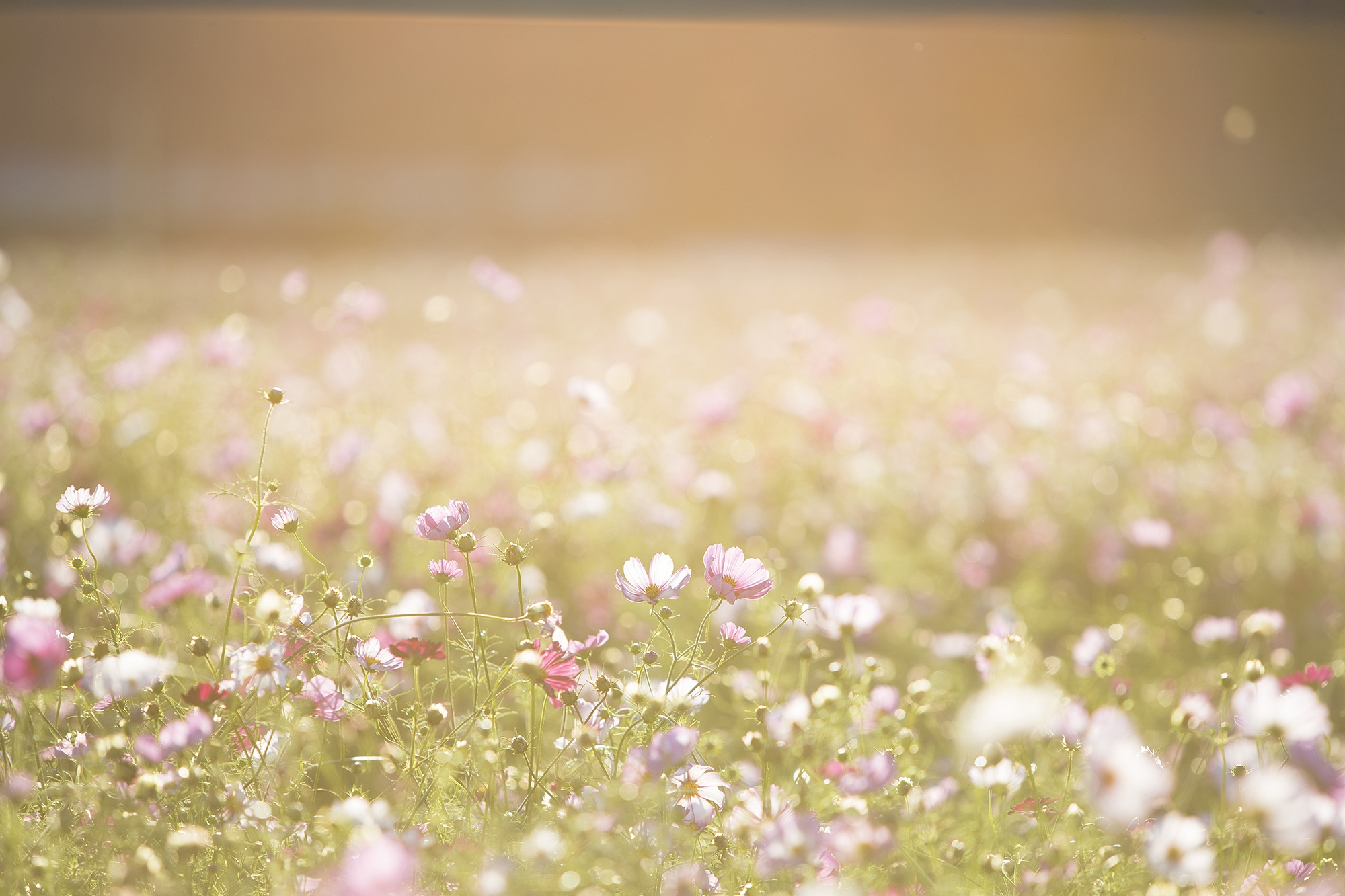 Baby Pink Iphone Wallpaper 1000 Great Flower Background Photos 183 Pexels 183 Free Stock