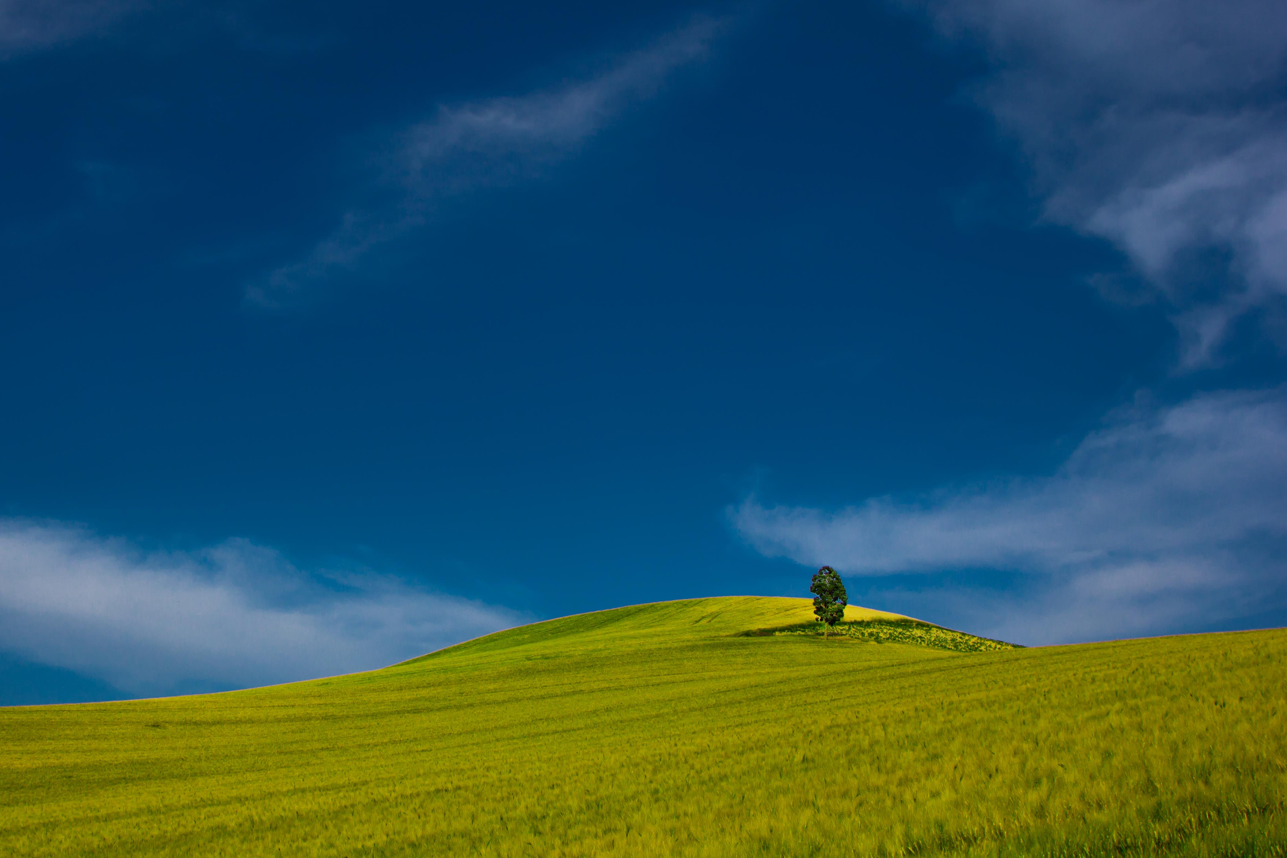 Black Wallpaper Iphone Green Tree On Grass Field During Daytime 183 Free Stock Photo