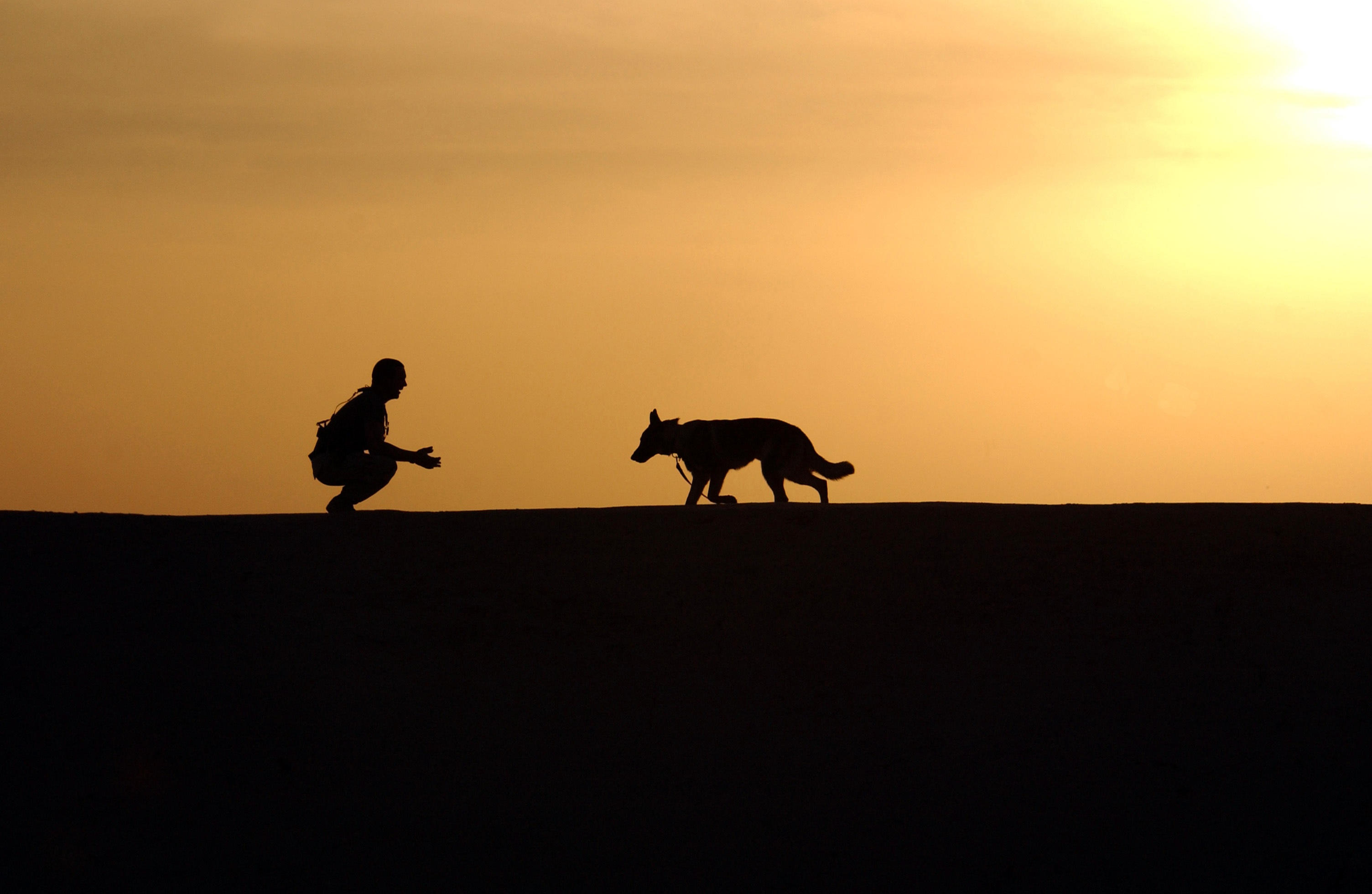 Samsung Galaxy Wallpaper Hd Silhouette Photo Of Man An Dog During Sunset 183 Free Stock